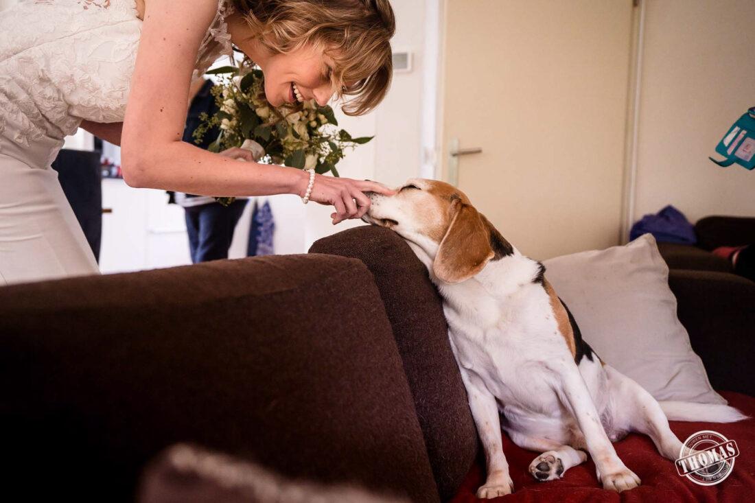 De bruid aait de hond.
